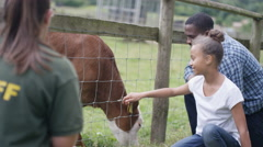 4K Father & daughter at community farm, stroking young calf & talking to keeper. Stock Footage