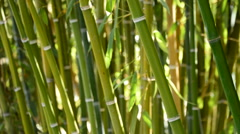 Natural bamboo canes Stock Footage