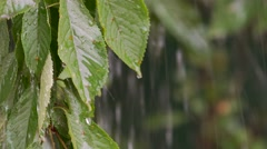 Rain drops falling on leaves Stock Footage