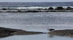 Night Heron Bird Fishing on Rocks Hawaii Pacific Ocean with Waves Stock Footage