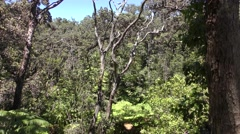 Tropical Jungle in Volcanoes National Park in Hawaii Stock Footage