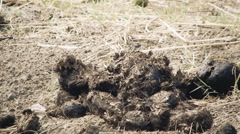 Horse manure handheld Stock Footage