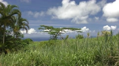 Lone Tree Waving in Lush Grassy Field in Hawaii Paradise and Blue Sky Stock Footage