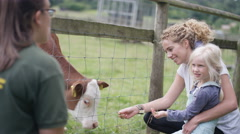 4K Mother & daughter at community farm, feeding young calf & talking to keeper Stock Footage