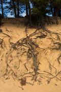 Tree Roots Erosion Stock Photos