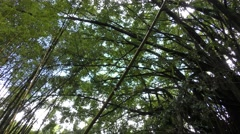 Hawaii Paradise Jungle Rainforest Vegetation and Small Stream Stock Footage