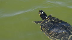 Turtle floating in the waters of a lake Stock Footage