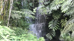 Small Waterfall from Flowing Stream and Ferns in Hawaii Jungle Stock Footage