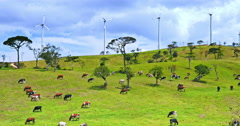 Modern countryside landscape of wind power turbines on green hills with cows Stock Footage