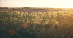 4k aerial view. Low flight over green and yellow wheat rural field Stock Footage