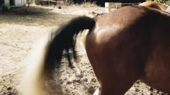 Horse tail shake handheld Stock Footage