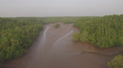 Aerial view of mangrove forest Stock Footage