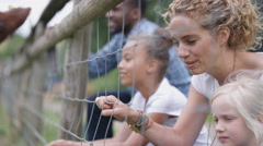 4K Happy mixed race family at community farm feeding cow through wire fence Stock Footage