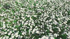 Flower field Stock Footage