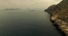 Seagull Flying Along Island Coast Aerial Stock Footage