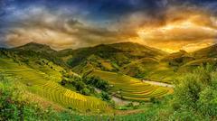 Rice fields on terraced in sunset at Mu chang chai, Yen bai, Vietnam. Rice fi Stock Photos