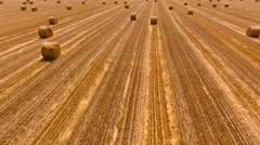 Aerial View.Harvesting the wheat field. Aerial drone shot. Arkistovideo