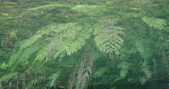 Reflection in a river of native forest in the coromandel Peninsula Stock Footage