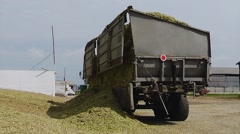 Truck Unloads Harvested for Silage Maize on the Farm Stock Footage