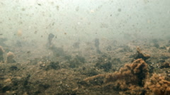 Underwater view of gas bubbling out of the sediment in a natural volcanic spring Stock Footage