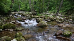 Mountain river in the Primorye Territory. Siberia, Russian Far East. Stock Footage