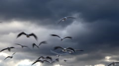 Seagulls Flying and Clouds Stock Footage