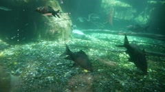 Fish in an aquarium, background. Stock Footage