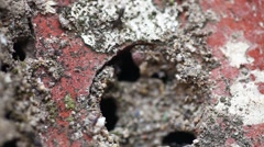 Ants on the Stone Stock Footage