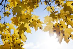 Nature in autumn season Stock Photos