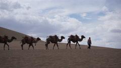 Camels walking on desert, Dunhuang Stock Footage