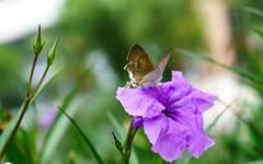 Asian butterfly on a flower - stock photo