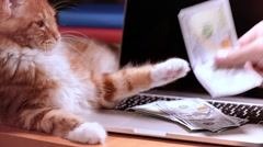 Cat and money with laptop Stock Footage