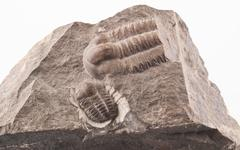 Trilobite fossil from the early Cammbrian peroid Stock Photos