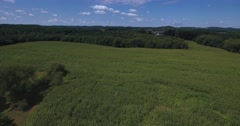 High Forward Aerial Fly Over Large Corn Fields in Western Pennsylvania.   Stock Footage