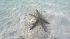 Time Lapse of Long-armed Starfish Moving Arms Underwater Stock Footage