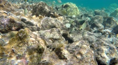 Hawaii Tropical Coral Reef Colorful Fish Species Underwater in 4K Stock Footage