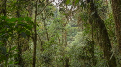Interior of very humid cloud forest with a waterfall in background. Stock Footage