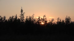 Sunset in Savo of Finland. Sun hides itself behind bushes Stock Footage