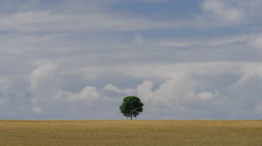 Lonely tree in the field Stock Footage