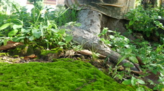 Moss in the forest Background, Stock Footage