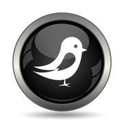Bird icon. Internet button on white background. . Piirros