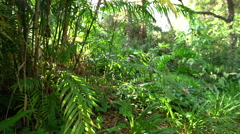 Sub Tropical Jungle 01 4K Stock Footage