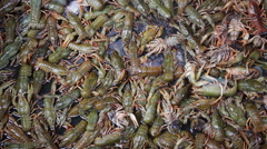 Fresh Crayfish are Sold at the Fish Market on the Counter Stock Footage