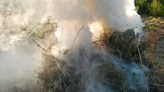 Fire fire burns twigs and wood Stock Footage