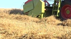 Combine harvester thresh grain cereal in farmland at summer. 4K Stock Footage