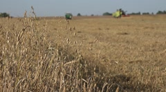 tractor combine work in oat field at harvest time in country. 4K - stock footage