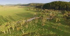 Aerial over farm with Nikau trees in the coromandel, New Zealand Stock Footage