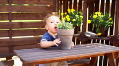 Baby is playing with flower pot at the table Stock Footage