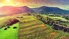 Aerial view of vineyard meadow in Alsace, France. Agricultural concept Stock Footage
