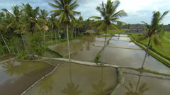 Rice fields in the north of Ubud and coconut trees Stock Footage